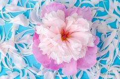 Creative layout of flower and petals stock image