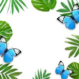 Creative layout of foliage on a white background with space for text. Frame of leaves and butterfly. Floral background. View from above vector illustration