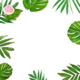 Creative layout of foliage on a white background with space for text. Frame of leaves and flowers. Floral background. View from above Royalty Free Stock Images