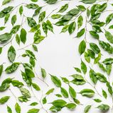Creative layout frame, made with green branches and leaves , flat lay. On white background, top view Stock Image