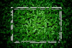 Creative layout, green leaves with white square frame, flat lay,. For advertising card or invitation royalty free stock photos