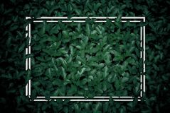 Creative layout, green leaves with white square frame, flat lay,. The creative layout, green leaves with white square frame, flat lay, for advertising card or stock photography