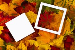 Creative layout made of autumn leaves with white paper card note and empty frame.  Royalty Free Stock Photos