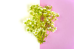 Creative layout made from flowers on background of colored paper Royalty Free Stock Photo