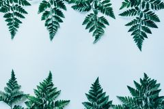 Creative layout made of green leaves Royalty Free Stock Photos