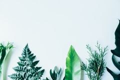 Creative layout made of green leaves Royalty Free Stock Photography