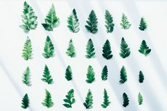 Creative layout made of green leaves Royalty Free Stock Images