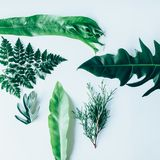 Creative layout made of green leaves Stock Images