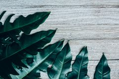 Creative layout made of green leaves Stock Photos