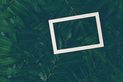 Creative layout made of green leaves with white frame. Top view, flat lay. Creative layout made of green leaves with white frame. Top view, flat lay Stock Photos