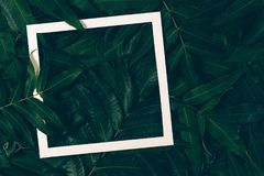 Creative layout made of green leaves with white paper frame. Top view, flat lay. Creative layout made of green leaves with white frame. Top view, flat lay Royalty Free Stock Photography