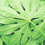 Creative layout made of green tropical leaves, flat lay, frame. Nature concept stock photos