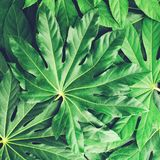 Creative layout made of green tropical leaves, flat lay, frame. Nature concept, toned image royalty free stock photo