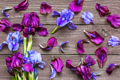 Creative layout made of iris flowers and petals royalty free stock photo