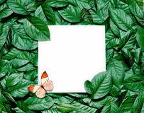 Creative layout made of leaves with paper card note. Flat lay. Nature concept. Creative layout made of leaves with paper card note and butterfly. Flat lay royalty free stock image