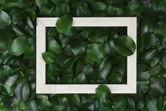 Green leaves. Creative layout made of leaves with paper card note or frame. A flat lay. Nature concept. Creative layout made of leaves with paper card note or Royalty Free Stock Image