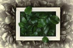 Green leaves. Creative layout made of leaves with paper card note or frame. A flat lay. Nature concept. Creative layout made of leaves with paper card note or Royalty Free Stock Photography