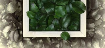 Green leaves. Creative layout made of leaves with paper card note or frame. A flat lay. Nature concept. Creative layout made of leaves with paper card note or Stock Photo
