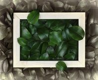 Green leaves. Creative layout made of leaves with paper card note or frame. A flat lay. Nature concept. Creative layout made of leaves with paper card note or Stock Photos