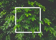 Creative layout made of leaves with white paper frame. Flat lay. Nature concept stock photos