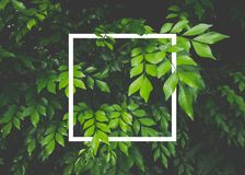 Creative layout made of leaves with white paper frame. Flat lay. Nature concept stock photography