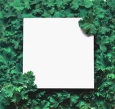 Creative layout made leaves with white paper frame. Flat lay. Nature concept.  Stock Photos