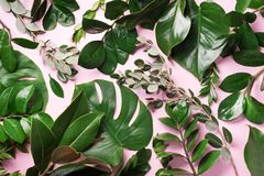Free Creative Layout Made Of Tropical Green Leaves On Pink Background. Flat Lay. Top View. Summer Or Spring Nature Concept. Blank For Stock Photos - 149171793