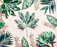 Creative layout made of various tropical palm and fern leaves. Exotic plants on pastel pink background, top view royalty free stock photography