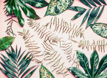 Creative layout made of various tropical palm and fern leaves on pastel pink background, top view Stock Photos
