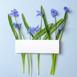 Creative layout made of violet spring flowers and blank empty card on pastel blue background. Minimal holiday concept. Flat lay stock photography