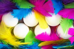 Creative layout made of white chicken eggs with colorful feathers trendy neon colors. Spring and Easter holiday party concept with copy space. Flat lay, top stock photography
