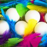 Creative layout made of white chicken eggs with colorful feathers trendy neon colors. Spring and Easter holiday party concept with copy space. Flat lay, top royalty free stock photo