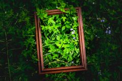 Creative layout made of wood frame and green leaves in darklight,Layout design from natural and purple field. Creative layout made of wood frame and green leaves Stock Photography