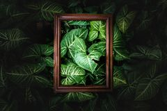 Creative layout made of wood frame and green leaves in the darklight,Layout design from nature. Creative layout made of wood frame and green leaves in darklight Royalty Free Stock Image
