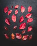 Creative layout of red autumn leaves on dark background, top view, flat lay. Seasonal fall. Concept Stock Image