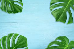Creative layout summer tropical leaf Flat lay composition. Green tropic leaves frame with copy space on blue wood background. Minimal concept stock photo