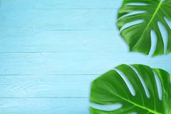 Creative layout summer tropical leaf Flat lay composition. Green tropic leaves frame with copy space on blue wood background. Minimal concept stock photos