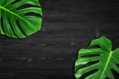 Creative layout summer tropical leaf Flat lay composition. Green tropic leaves frame with copy space on dark black wood background. Minimal concept royalty free stock photo