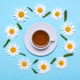 Creative layout with white tea cup with chamomile frame on a blue background. View from above Royalty Free Stock Image