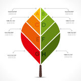 Creative leaf info-graphic Stock Image