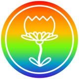 A creative lotus flower circular in rainbow spectrum. An original creative lotus flower circular in rainbow spectrum royalty free illustration