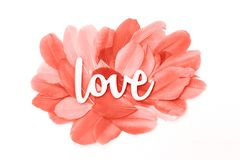 Creative love with monochrome coral feathers royalty free stock images