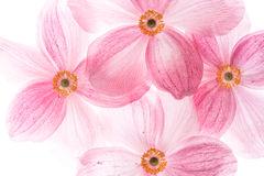 Creative macro picture of pink flowers Stock Photography
