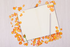 Creative mock up with a card and orang rose. Empty sheet of paper. Stock Photography