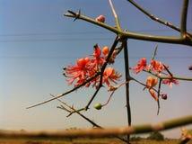 Creative nature Stock Photo