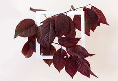 Creative and nature concept. Layout made of leaves with paper card frame for text.  royalty free stock photography