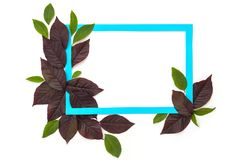 Creative and nature concept. Layout made of leaves with paper card frame for text.  royalty free stock images