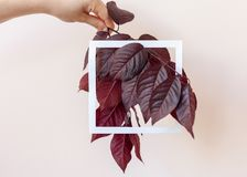 Creative and nature concept. Layout made of leaves with white paper card frame for text. Girl holding tree branches and leaves in hand stock photo