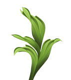 Creative painted foliage, illustration of green grass and leaves Royalty Free Stock Photo