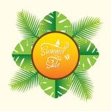 Summer sale banner design. Creative palm tree leaf background, summer sale poster design Royalty Free Stock Image